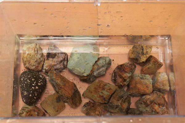 自然石、水槽レイアウト