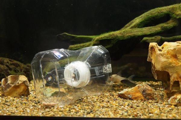 熱帯魚、罠